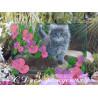 Набор для вышивания открытки бисером Butterfly 725 Котенок фото