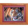 Набор для вышивки крестом Чарівна Мить 469ч Тигр фото