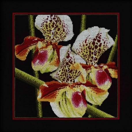 Набор для вышивки RTO M263 Орхидеи Пафилопелиум фото