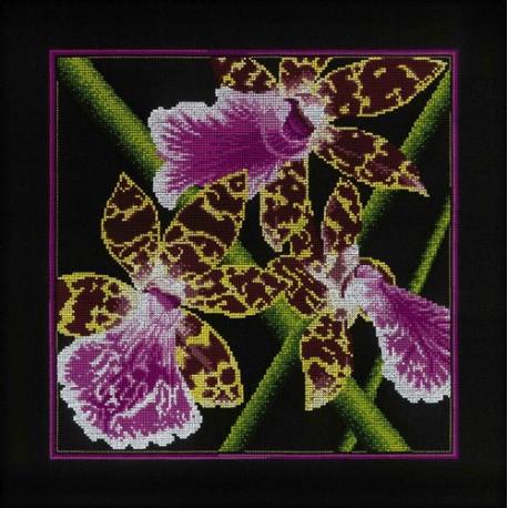 Набор для вышивки RTO M265 Орхидеи Зигопеталум фото