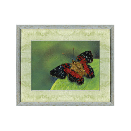 Набор для вышивания Чарівна Мить Б-538 Бабочка фото