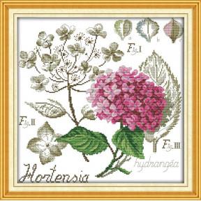 Ботаника. Гортензия Набор для вышивания крестом с печатью на ткани NKF H 496