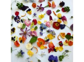 Как правильно засушивать цветы и делать из них сувениры?